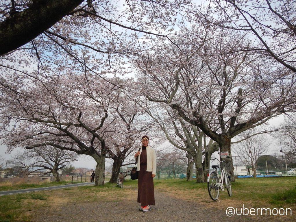 Itinerary Jepang ke Arashiyama Park