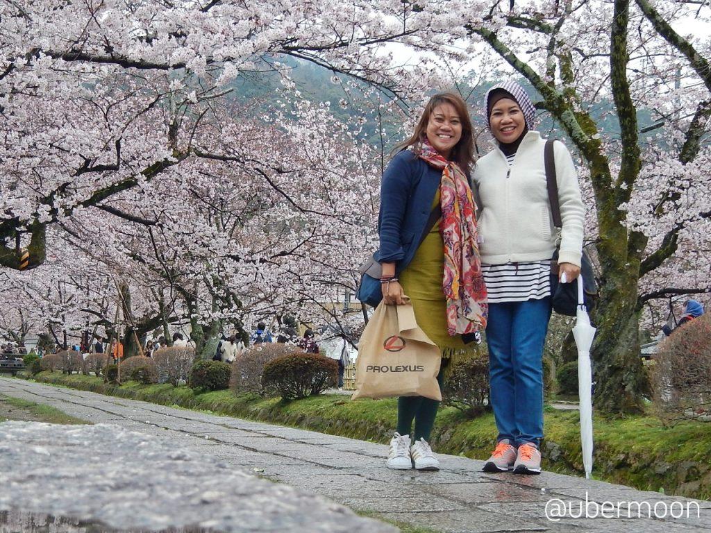 Itinerary Jepang melihat Sakura