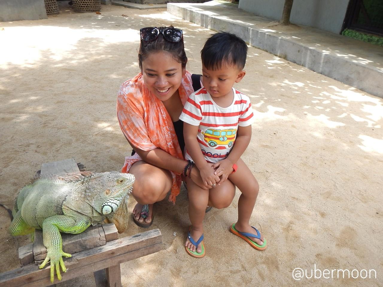 Melihat Iguana di Pulau Penyu