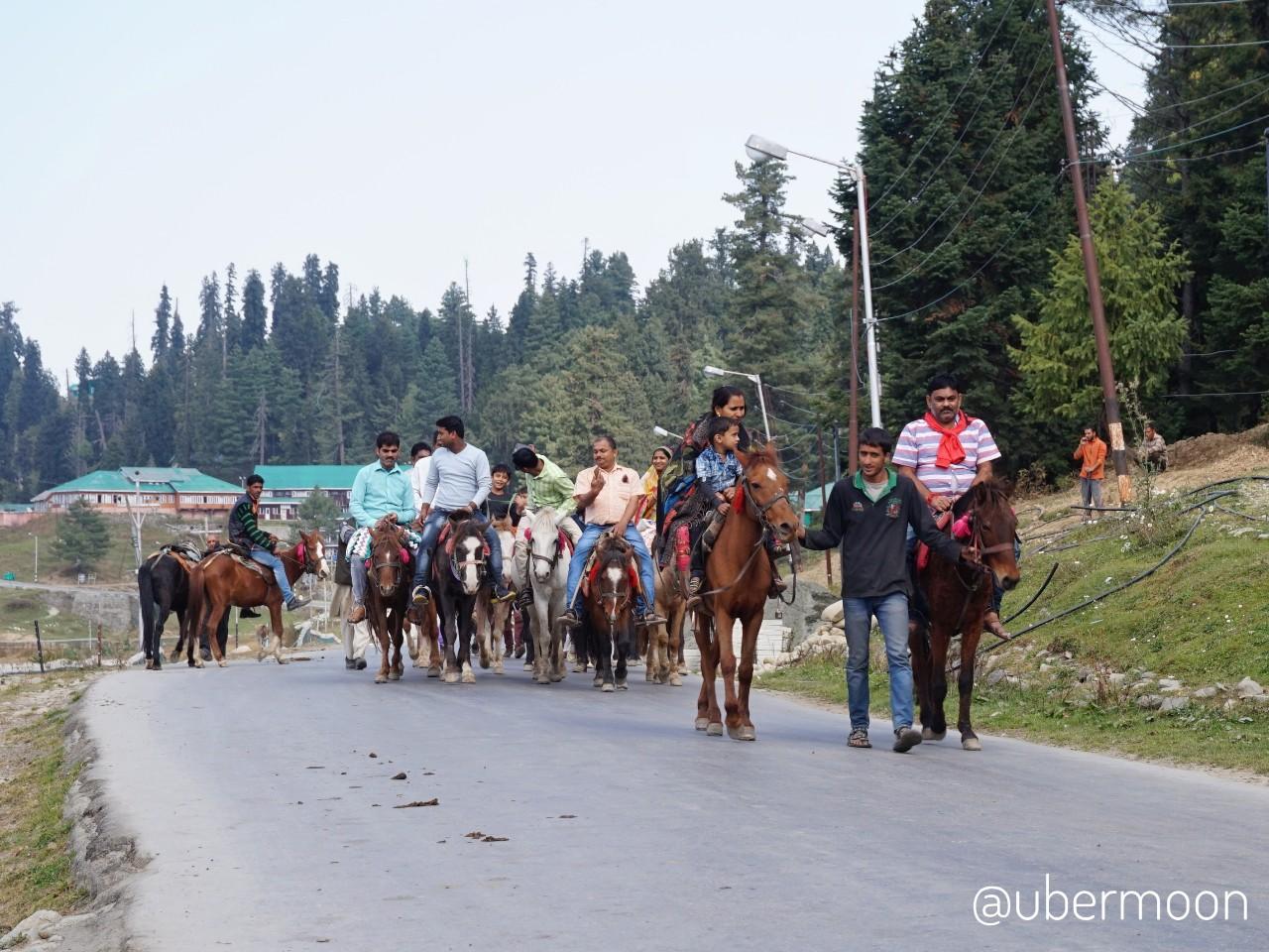 Naik Kuda di Gulmarg Kashmir