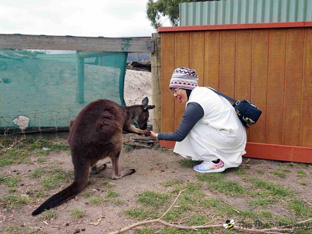 Feeding Kangaroo at Maru Wildlife Park