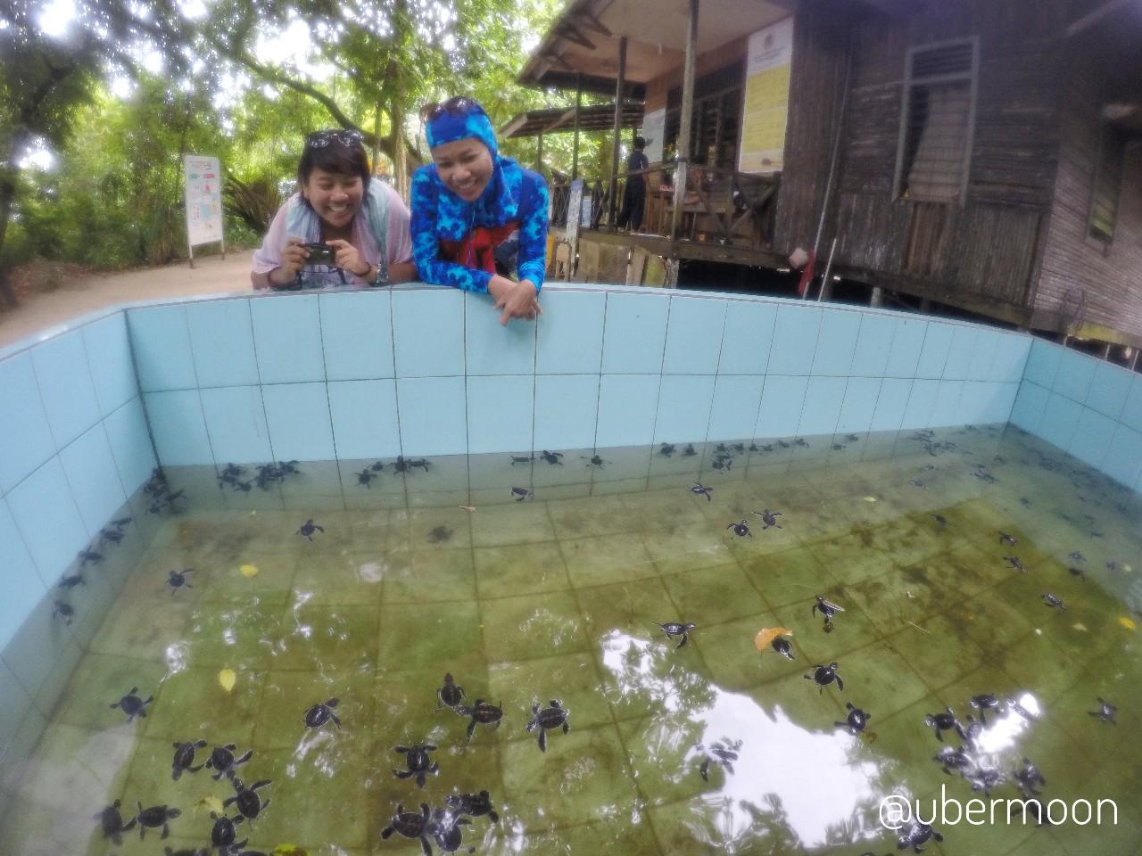 Konservasi Penyu Pulau Sangalaki
