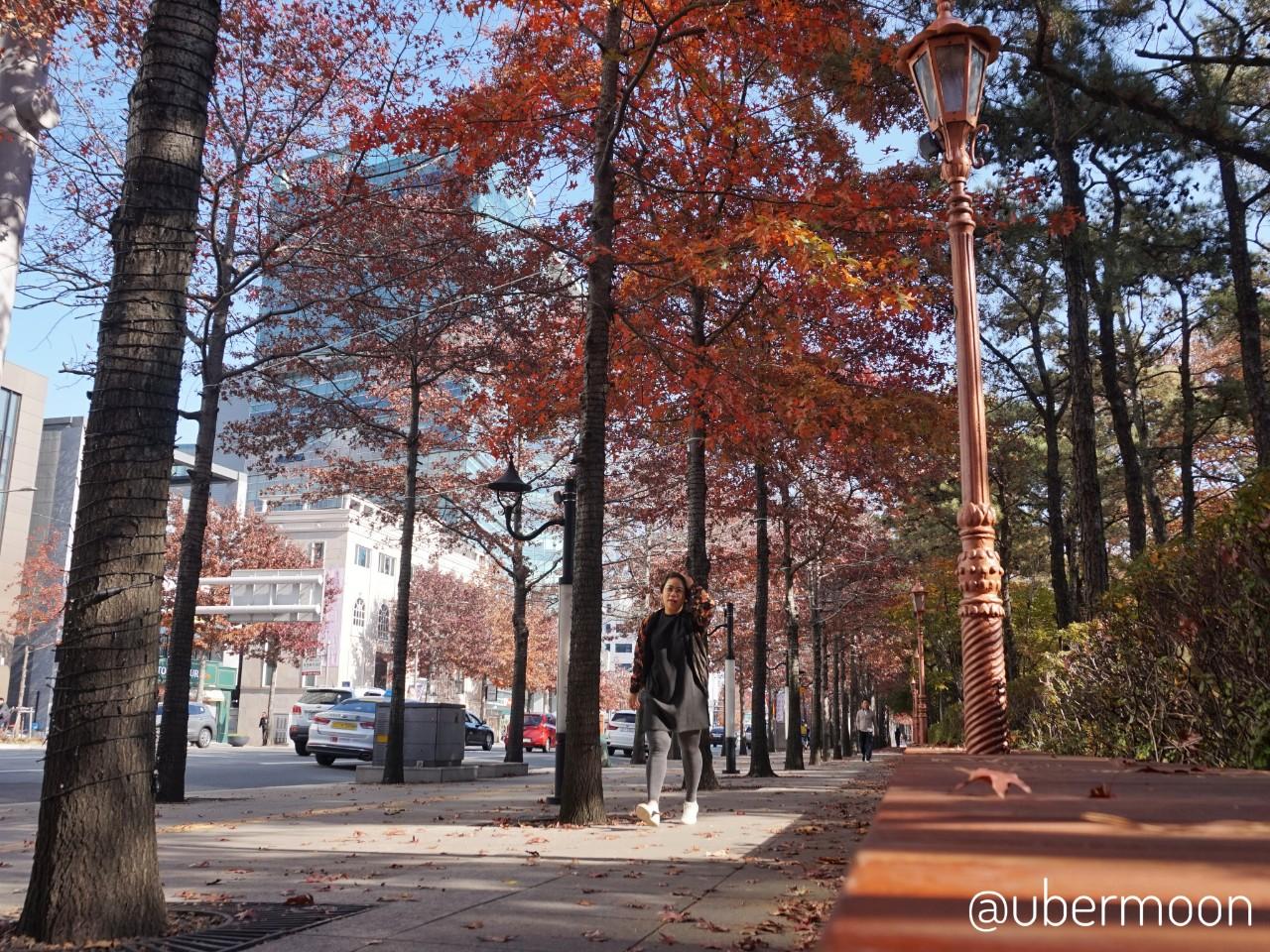 Red Autumn in Daegu