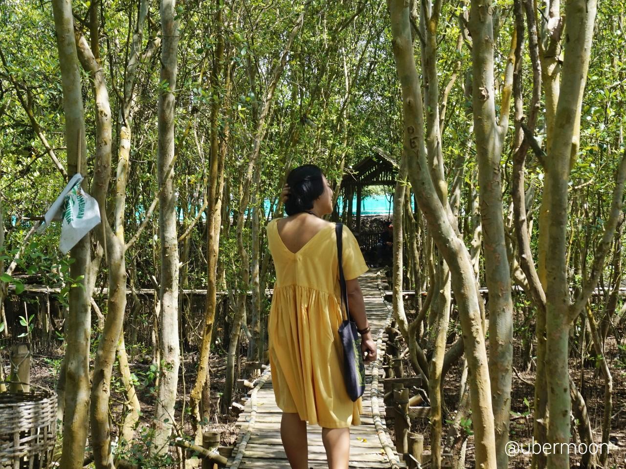Hutan Bakau Wana Tirta Kulon Progo