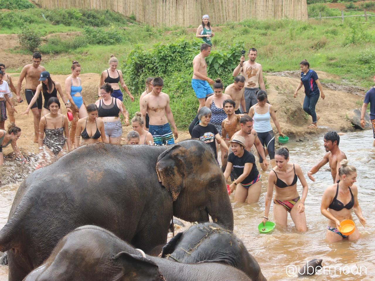 Memandikan Gajah di Elephant Sanctuary