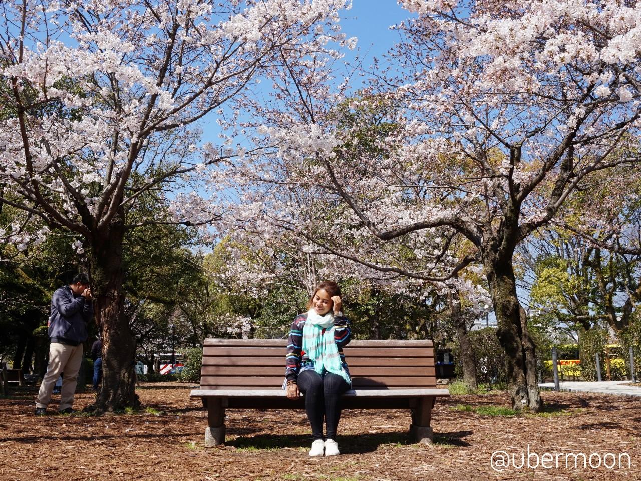 Musim Sakura Jepang