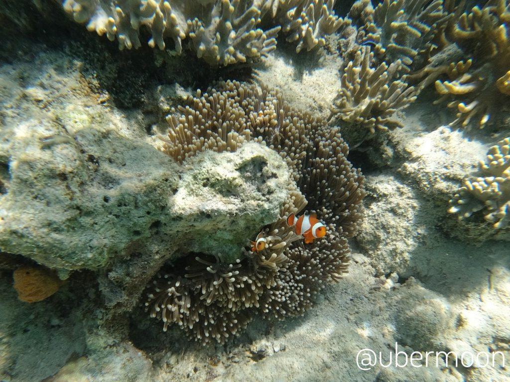 Underwater Riung